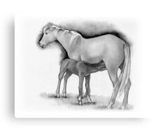 Foal and Mare, Horse Mother and Baby, Pencil Drawing Canvas Print