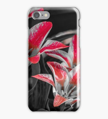 Tulips With A Splash Of Color iPhone Case/Skin