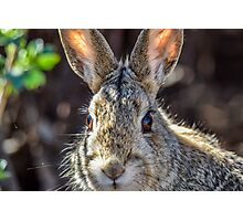 Face Of A Rabbit Photographic Print