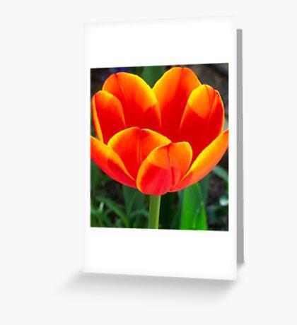 Home-grown Tulip Greeting Card