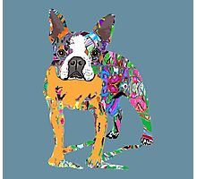 Boston Terrier Graffiti Photographic Print