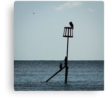 Cormorants on Sea Defence  Canvas Print