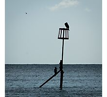 Cormorants on Sea Defence  Photographic Print