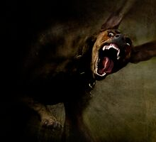 Dogs with game face on 666. by Alex Preiss