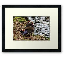 Mandarin ducks Framed Print