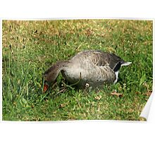 Gray Goose in Grass and Flowers Poster