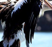 Pelican Grooming Sticker