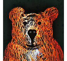Honey Bear Large Photographic Print