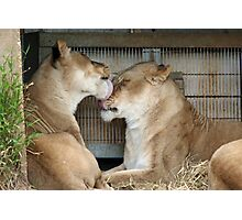 I lick you face Photographic Print