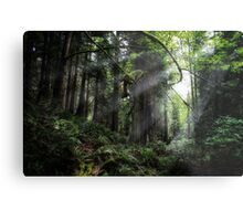 Forest Moon of Endor  Metal Print