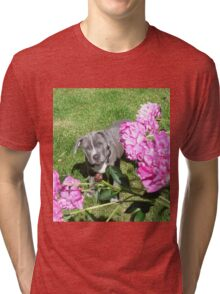 Gorgeous Baby Pit Bull Puppy Dog in Peony Flowers Tri-blend T-Shirt