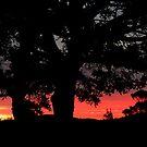 Autumn sunset......! by Roy  Massicks