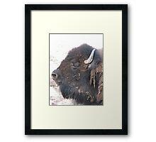 BUFFALO Framed Print