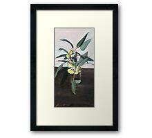Yellow eucalyptus blossom      Framed Print