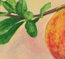 Pomegranate fruit still life Sticker