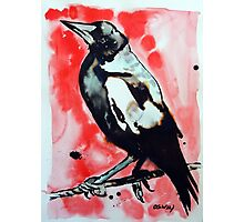 Magpie Photographic Print