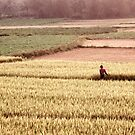 Farmer in Rice Field Vietnam by Andrew  Makowiecki