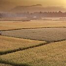 Farmland at Dawn Vietnam by Andrew  Makowiecki