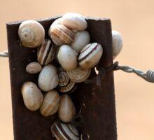 Snails on a post. Sticker