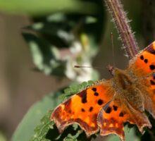 Butterfly. Sticker