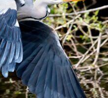 Grey Heron in Flight. Sticker