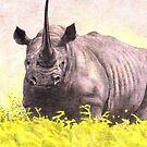Rhino by HandsonHart