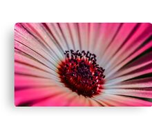Daisy Stone in White & Pink - Living Community Canvas Print