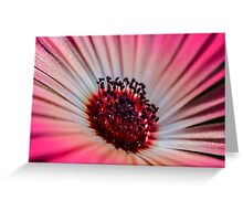 Daisy Stone in White & Pink - Living Community Greeting Card