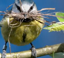 Blue Tit with nesting material 1. Sticker