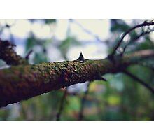 Bokeh Branch! Photographic Print