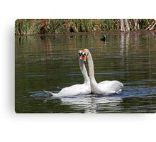 Swan Love 2. Canvas Print