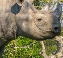 Black Rhino Sticker