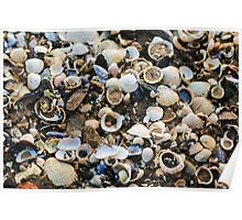 Mixture of Shells in Sand Poster