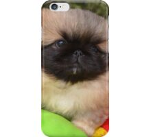 Small pekingese puppy iPhone Case/Skin