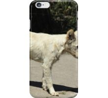 White Dog Next to a Street iPhone Case/Skin