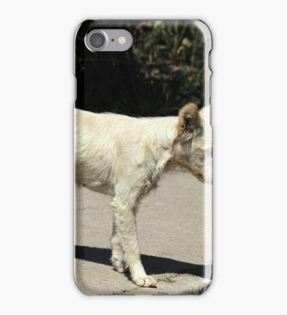 White Dog Next to a Street iPhone Case/Skin