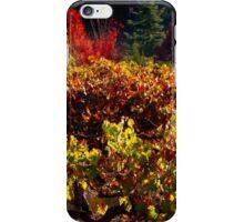 Autumn Vineyard Landscape iPhone Case/Skin