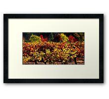 Autumn Vineyard Landscape Framed Print