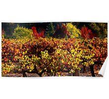 Autumn Vineyard Landscape Poster