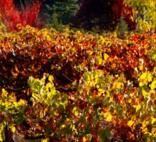 Autumn Vineyard Landscape Sticker