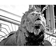 Art Institute Lion Photographic Print