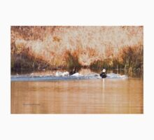 Hooded Merganser Couple Landing - Harle couronné - Parc National Mont Tremblant Baby Tee
