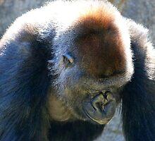 Gorilla - Cincinnati Zoo by virtualdiablo