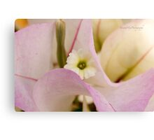 Bougainvilaea Canvas Print