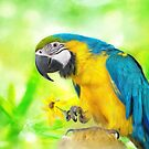Blue And Yellow Macaw by Lois  Bryan