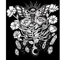 Death Moth Rising Photographic Print