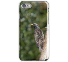 Starling plumage iPhone Case/Skin