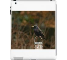 Common Starling iPad Case/Skin