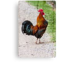 rooster in the farm Canvas Print