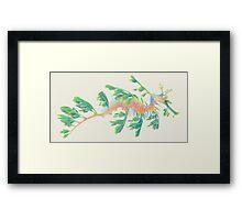 Blue-green leafy seadragon Framed Print